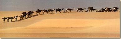 Tenere-Niger-Print-C10064422