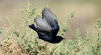 Flying-Bird-1