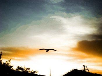 flying bird by junim bra